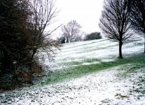 Ridge & Furrow - Newbold Beeches