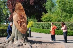 Copper beech, Jephson Gardens