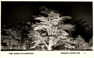 Lights of Leamington: The Cedar Tree