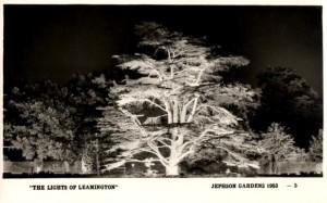 Lights of Leamington: The Cedar Tree