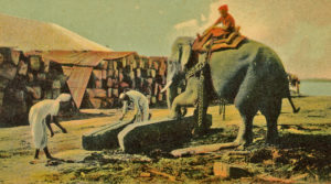 A working elephant in a timber yard in Ceylon