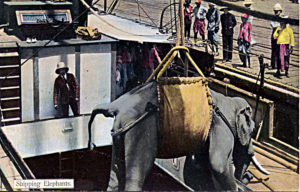 An elephant being hoisted onto a ship by means of a canvas strop