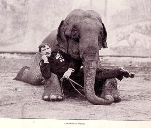 Sam's brother George his partner in their original circus act also became an elephant trainer